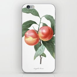 HIGHEST QUALITY botanical poster of Peach iPhone Skin