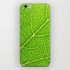 Green Leaf Veins 04 iPhone & iPod Skin