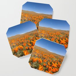 Blooming poppies in Antelope Valley Poppy Reserve Coaster