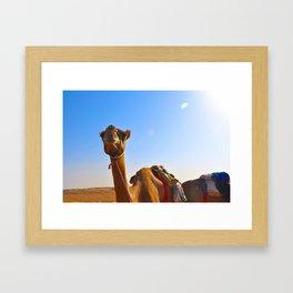 Camel Face Framed Art Print