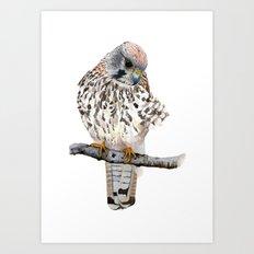 Kestrel Art Print
