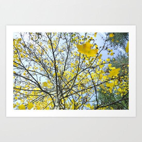 Yellow leaves raining Art Print