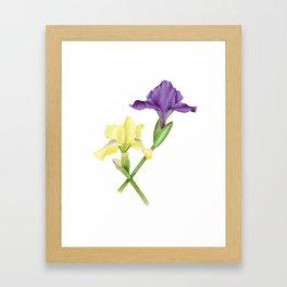 Watercolor irises Framed Art Print