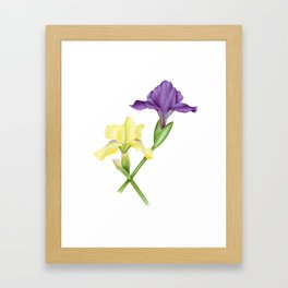 Watercolor irises Framed Art Print