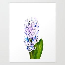 Hyacinth Illustration Art Print