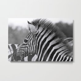 Young Punk, Africa wildlife Metal Print