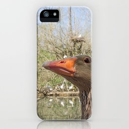 Close up portrait of Greylag goose iPhone Case