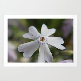White Flower Close Up Art Print