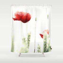 Poppy Poppies Mohn Mohnblume Shower Curtain
