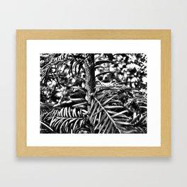 Sapling Framed Art Print