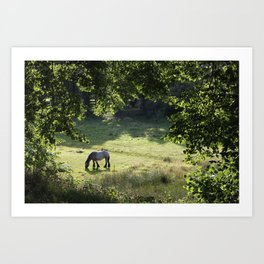Horse in Meadow Art Print