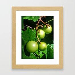 Muscadine Framed Art Print