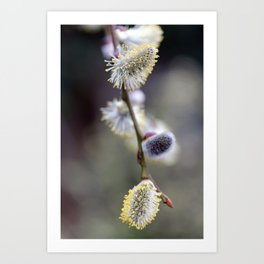 Bursting Buds Bowing in the Back Garden Art Print