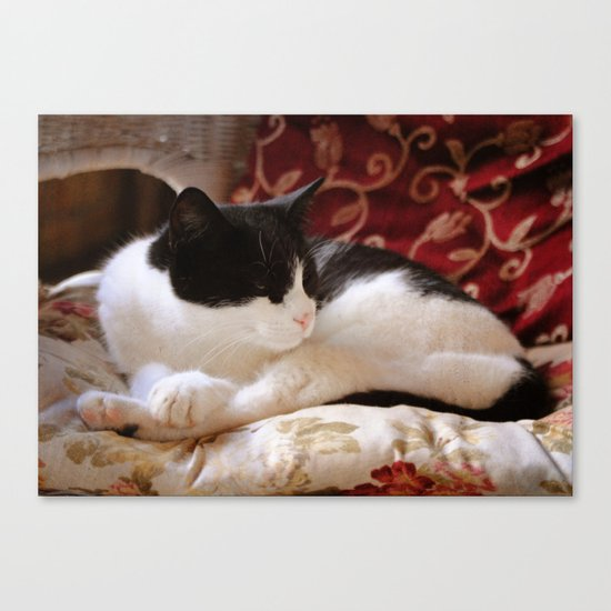 Oh, really? Canvas Print
