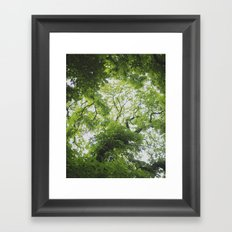 Up in the Trees Above Framed Art Print