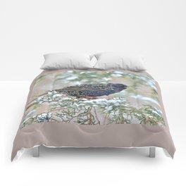 Mardi Gras Starling Comforters