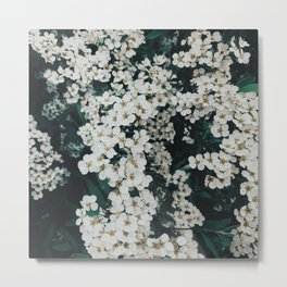 White flowering Metal Print