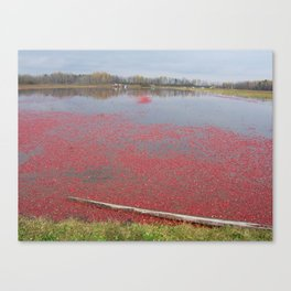 Cranberries Waiting To Be Rounded Up Canvas Print