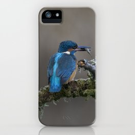 Kingfisher with Fish on a branch iPhone Case