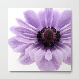Lilac Anemone Flower Metal Print