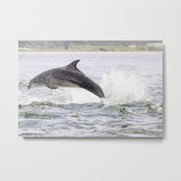 The leaping dolphin Metal Print