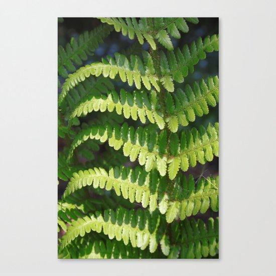 Fern Canvas Print
