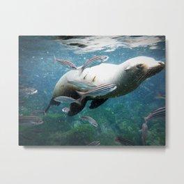 Seal Time Metal Print