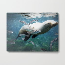 Seal Time Metal Print