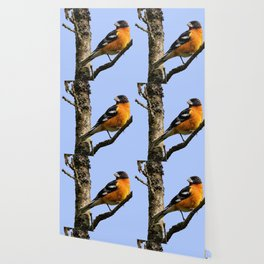 Profile of a Male Black-Headed Grosbeak Wallpaper