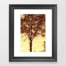 Sunny Tree Framed Art Print