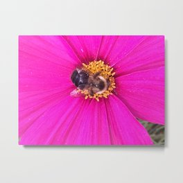 pollen recovery Metal Print