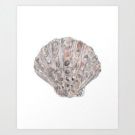 Seashell #4 Art Print