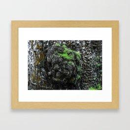 Tree Knots Framed Art Print
