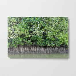 Daintree Rainforest- Mangroves Metal Print