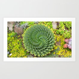 Swirly Succulent Art Print