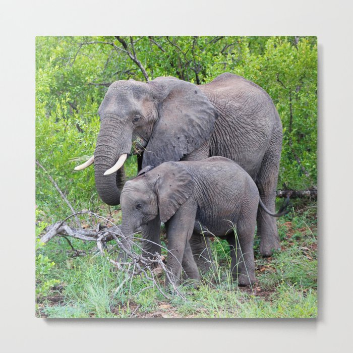 african elephant mother with baby Metal Print