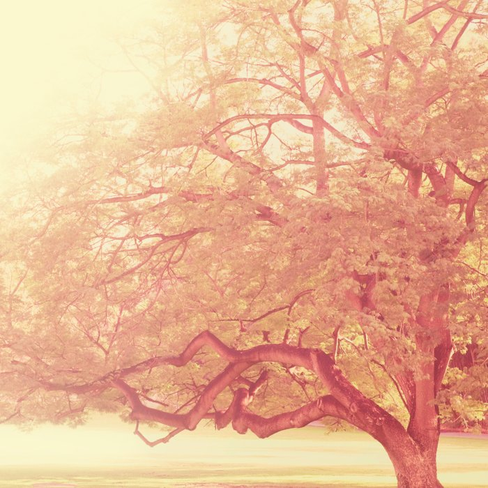 tree. That Was Just a Dream. pink tree photograph Comforters