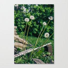 Wishing Flower Melody Canvas Print