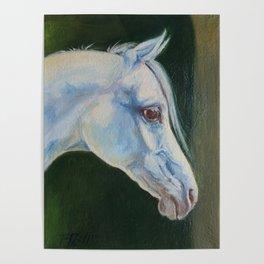 White Arabian Horse portrait Arab horse painting Poster