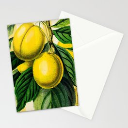 Plums with Stripes Stationery Cards