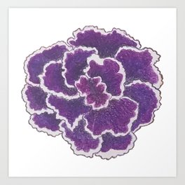 Purple Gloxinia Art Print