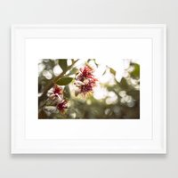 botanical Framed Art Prints featuring Botanical  by dibec