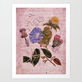 Botanical Study #4, Vintage Botanical Illustration Collage Art Art Print