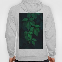 Leaves by Rodion Kutsaev Hoody