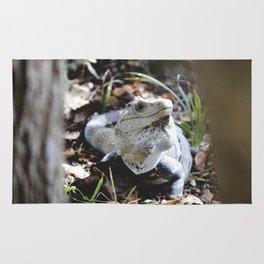 Iguana in Mexico Rug