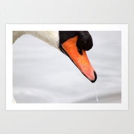 Swan Beak Art Print