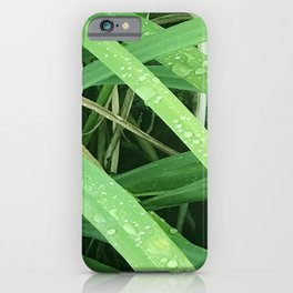 Diamond Drops of Dew on Blades of Grass iPhone Case