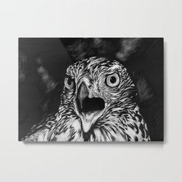 Fierce Falcon Metal Print