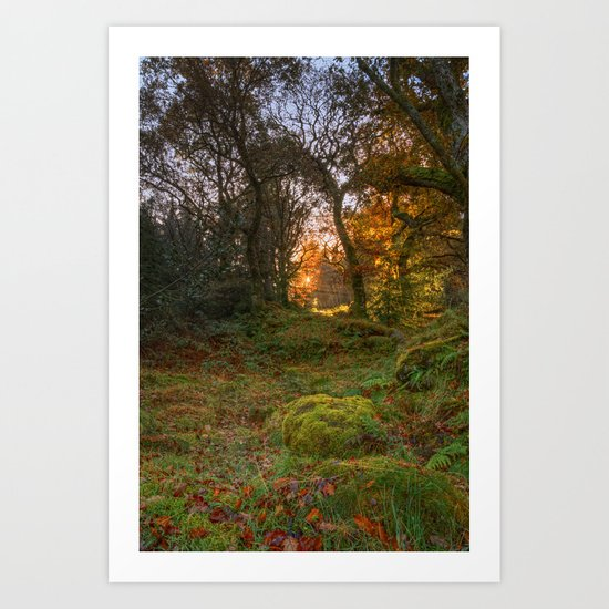 Sunlight wood Art Print