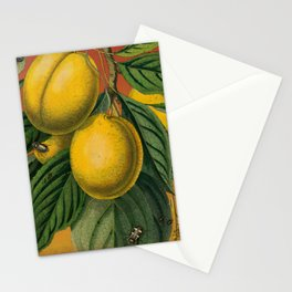 Plums with Bugs Stationery Cards
